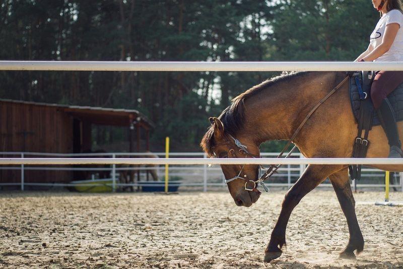 Sklep internetowy dla miłośników koni